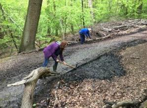 Works underway to restore Burnham Beeches and Stoke Common following 'severe damage' to green spaces