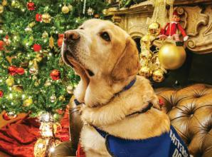 Claire's Comfy Canines raises £2,000 for Battersea Dogs and Cats Home at Christmas event