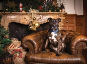 Battersea's longest-serving resident is looking for a home this Christmas