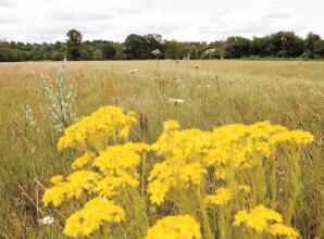 Join Cookham volunteers this weekend for wildflower planting