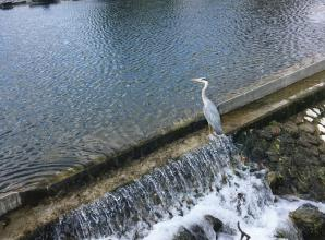 Judges choose winning photos for Maidenhead Waterways competition