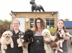 Cookham doggy daycare centre changes paws