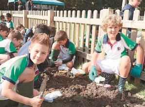 Junior school boys plant 3,000 flower bulbs at Claires Court School