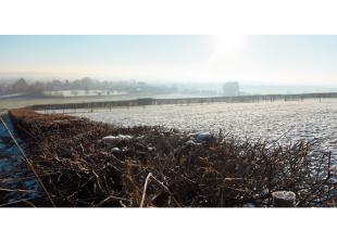 The Big Picture: A frosty Cookham Dean by Ian Longthorne