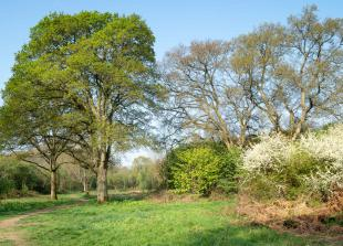 The Big Picture: Spring sunshine in Maidenhead Thicket by Rod Bird