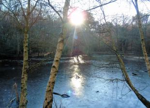 The Big Picture: The sun, woods and water at Burnham Beeches by David Wagner