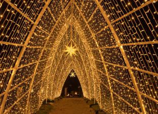 Christmas light trail to open at Windsor Great Park this winter