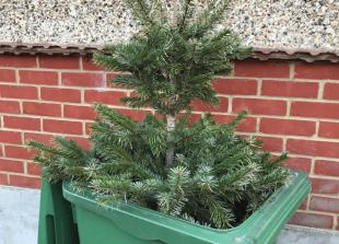 Council apologies after Christmas trees are not collected