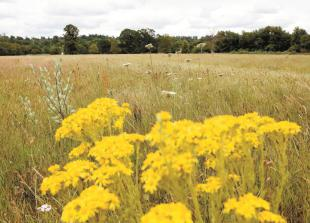 Wildlife group 'dismayed' by Battlemead Common masterplan