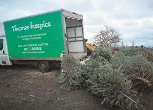 Christmas tree chipping raises £7,000 for Hospice