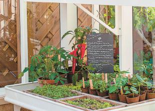 Get your greenhouse ready for autumn