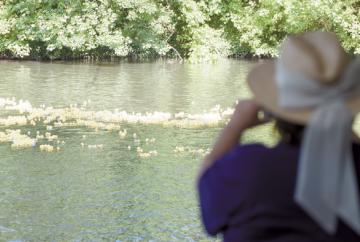 In pictures: Maidenhead Duck Derby